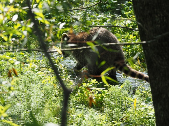 Animals of Murfree Springs (15 of 5)
