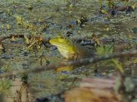 Animals of Murfree Springs (3 of 10)