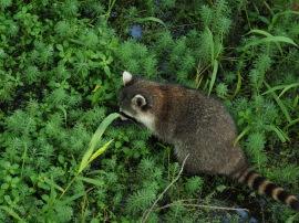 Animals of Murfree Springs (4 of 10)