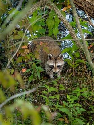 Animals of Murfree Springs (5 of 10)