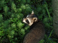 Animals of Murfree Springs (6 of 10)