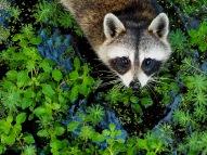 Animals of Murfree Springs (7 of 10)