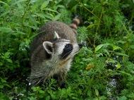 Animals of Murfree Springs (8 of 10)
