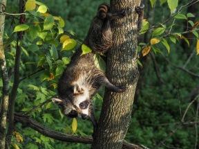 Animals of Murfree Springs (9 of 10)